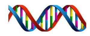What does your DNA say about you?